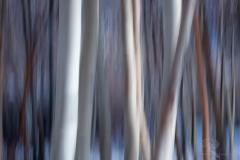 Aspen Abstract 1