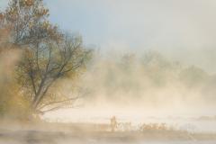 Sunrise Mist