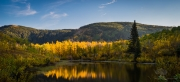 Aspens and Pine