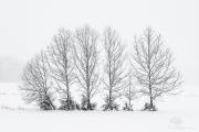 Winter Bonsai
