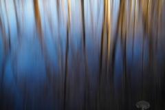 Wetlands Reflections