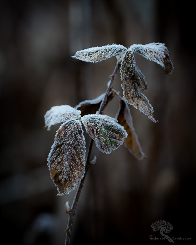 Killing-Frost.jpg