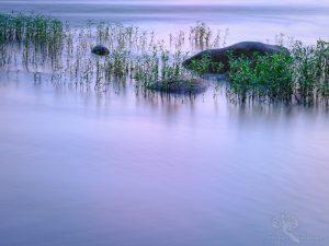 Three River Rocks and Grasses