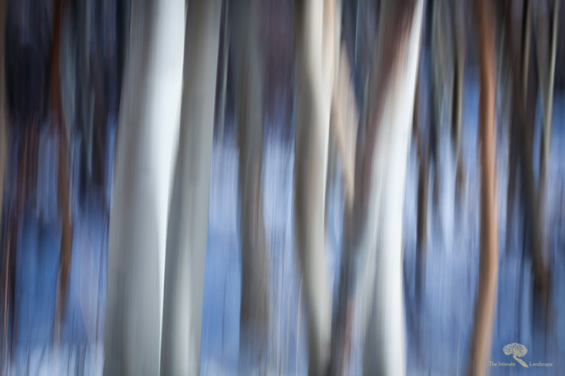 Aspen Abstracts