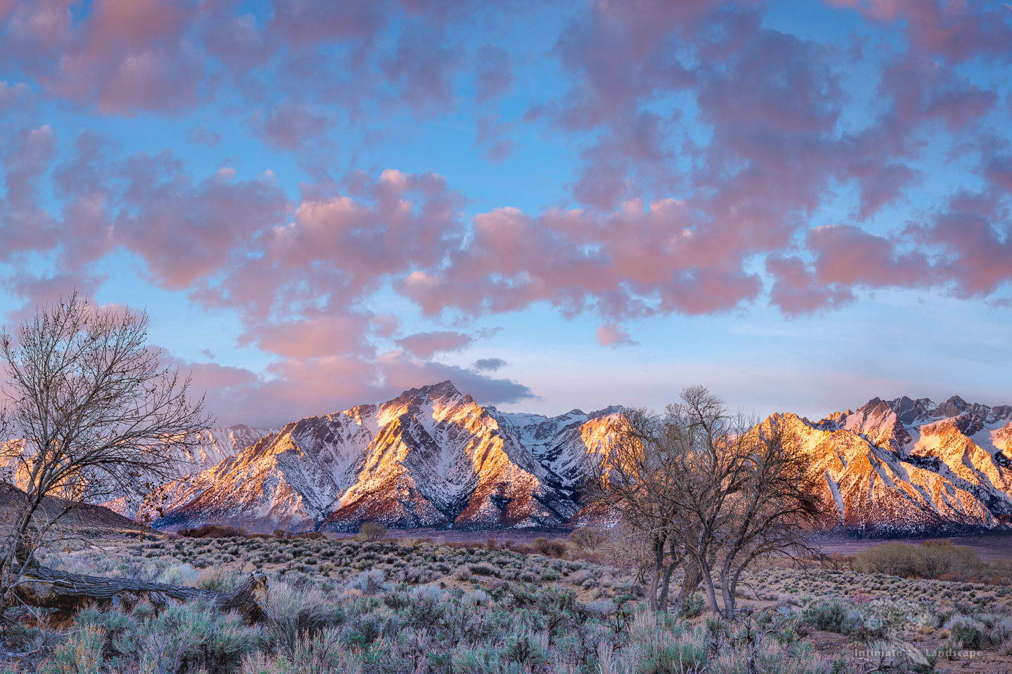 Lone Pine and Cottonwoods