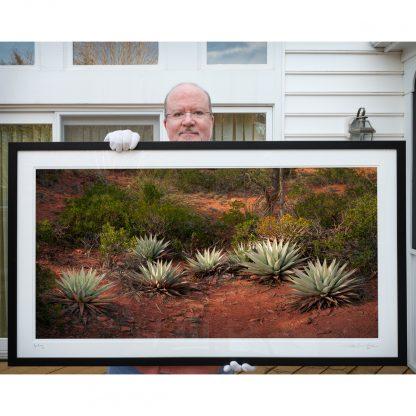 Agave Grove framed