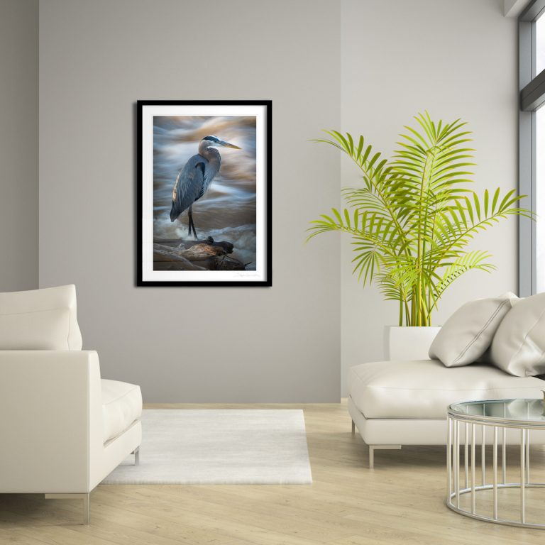 A framed, 20x30-inch print of Great Blue Heron displayed in a living room setting