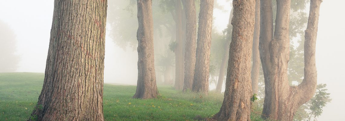 A grove of trees lining a bank of the Potomac River on a foggy morning