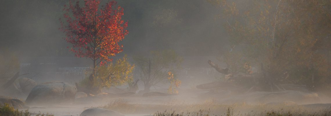 Morning mists part at sunrise to briefly reveal a small tree at peak autumn colors.