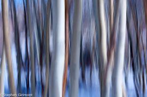Aspen Abstract 2.jpg