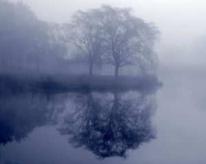 Willows in Fog.jpg
