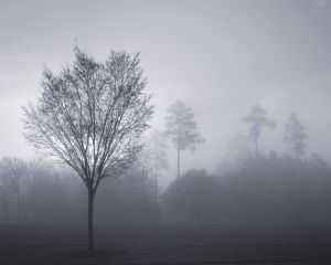 Small Tree in Fog.jpg