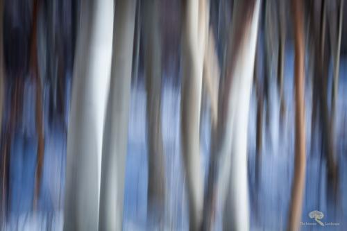 Aspen Abstract 3